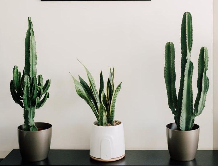 cómo cuidar un cactus saludable