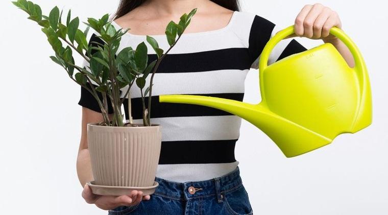cómo regar las plantas adecuadamente
