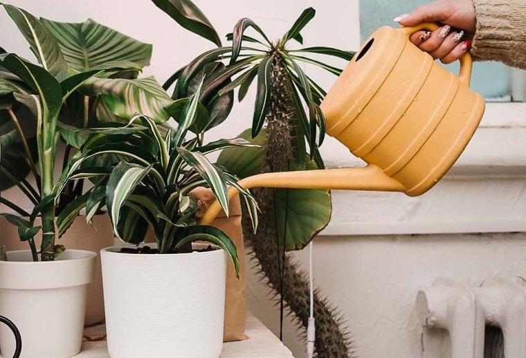 cómo regar las plantas consejos