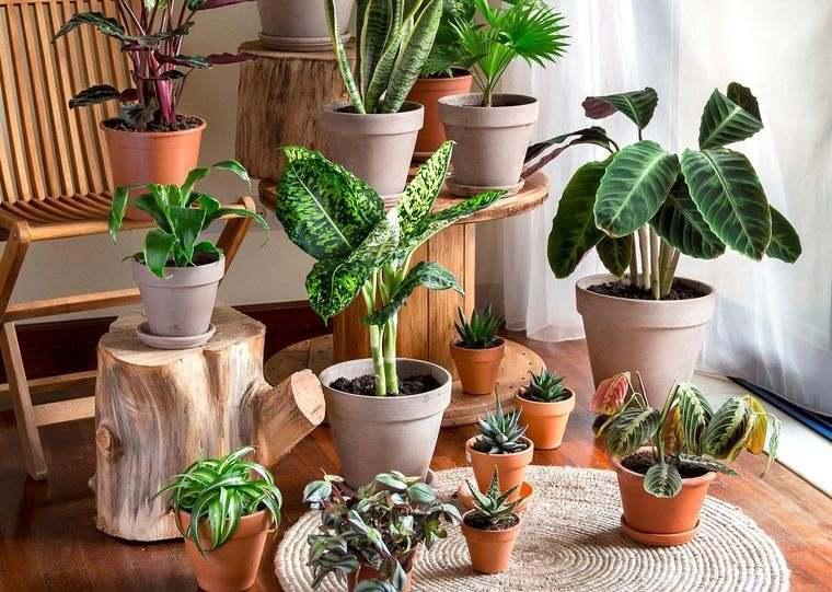 Cómo regar las plantas de manera adecuada dentro de tu hogar