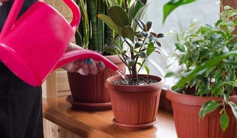 cómo regar las plantas de interior