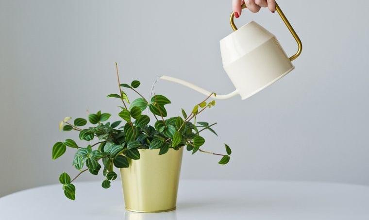 cómo regar las plantas dentro de casa