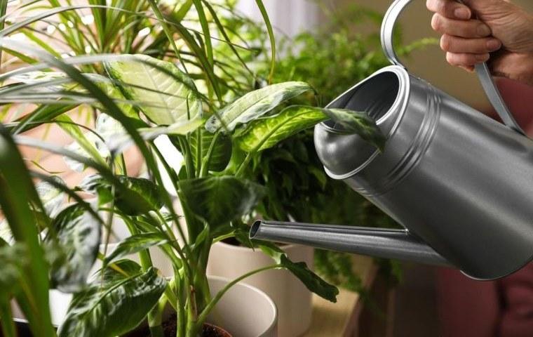 cómo regar las plantas en casa