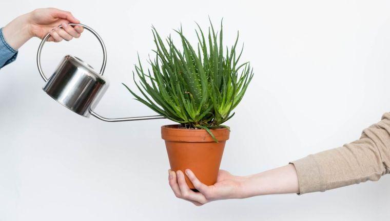 cómo regar las plantas en macetas