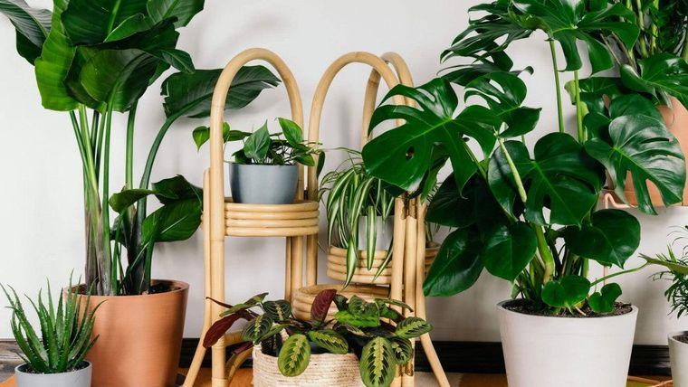 cómo regar las plantas mantenerlas vivas