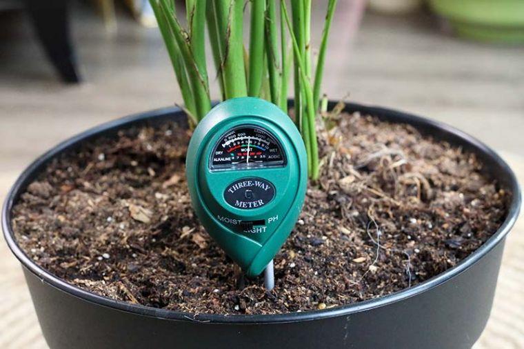 cómo regar las plantas monitor de humedad