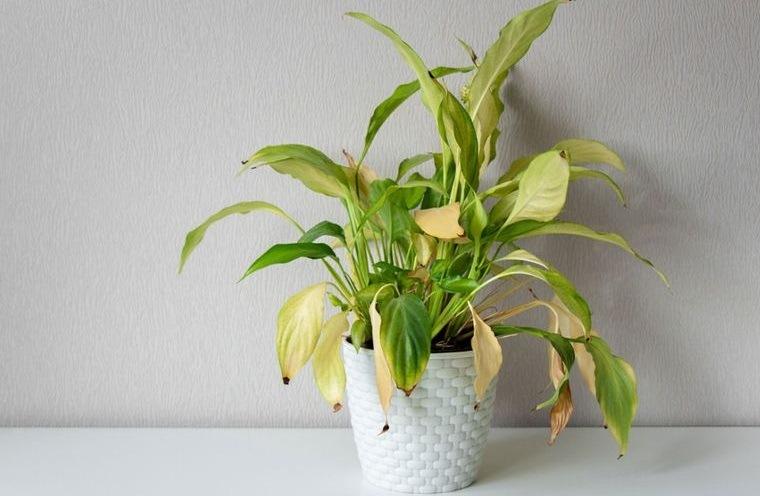 cómo regar las plantas para mantenerla saludable