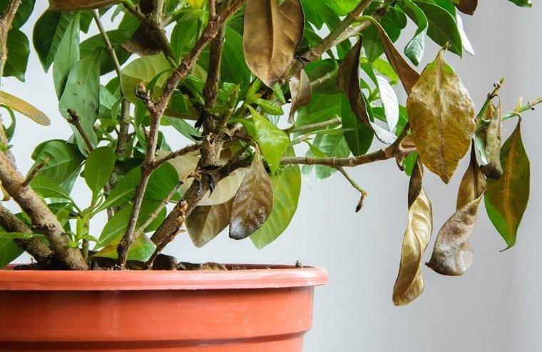 cómo regar las plantas para que no muera