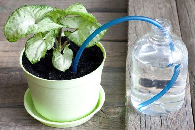cómo regar las plantas sin estar en casa