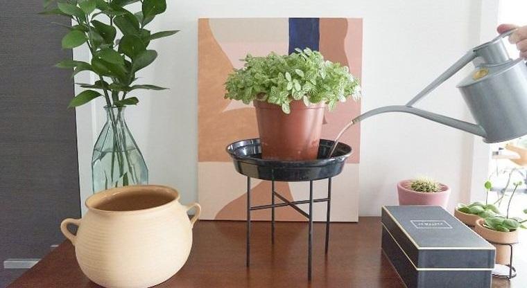 cómo regar las plantas sin exceso