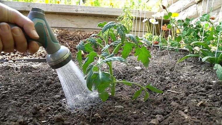 cómo trasplantar una planta al aire libre