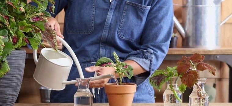 cómo trasplantar una planta cuidados