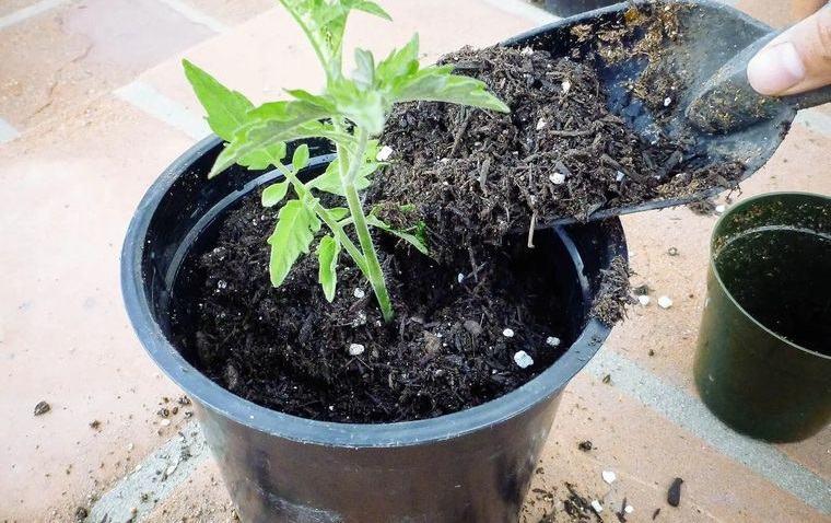 cómo trasplantar una planta darle espacio
