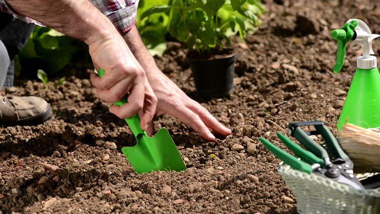 cómo trasplantar una planta en jardin