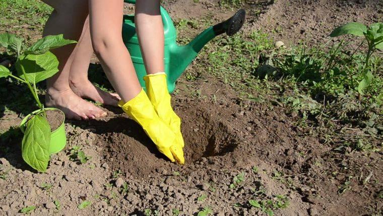 cómo trasplantar una planta en patio trasero