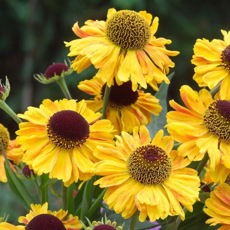 flores-de-otono-consejos-amarillo