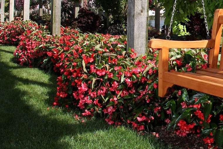 flores de otoño-consejos-begonia