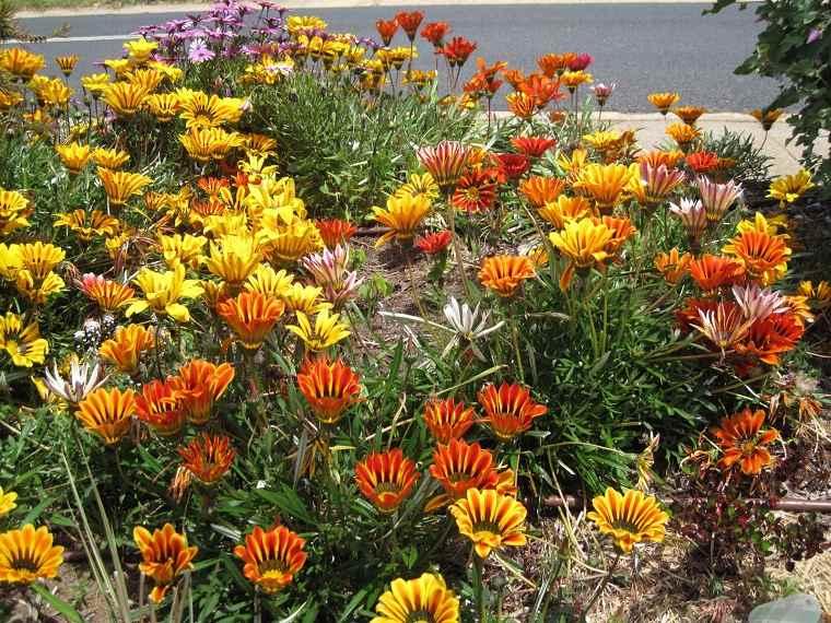 flores de otoño-consejos-gazania-ideas