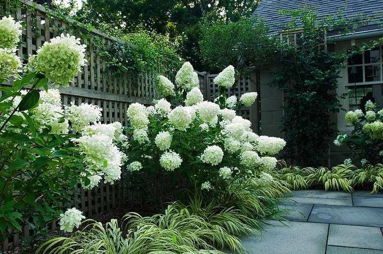 flores-de-otono-consejos-ideas-hortensias