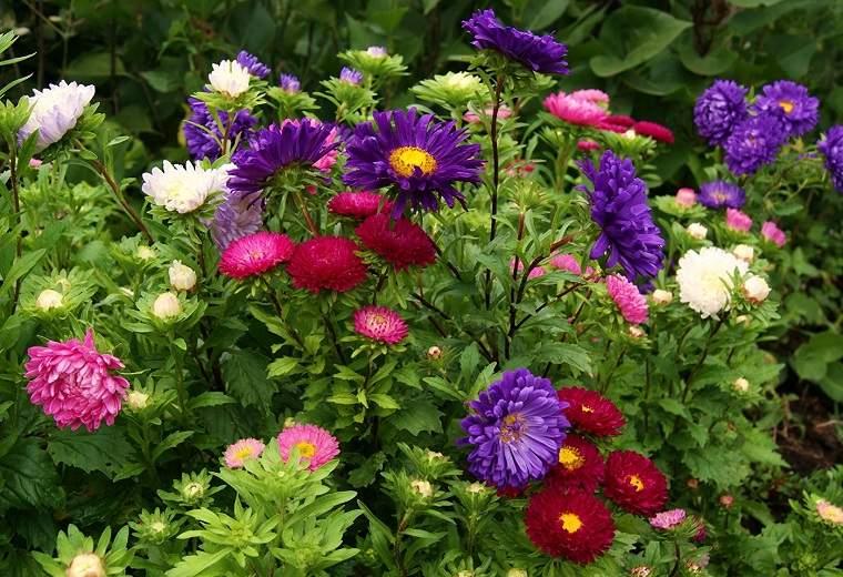 flores-de-otono-consejos-ideas