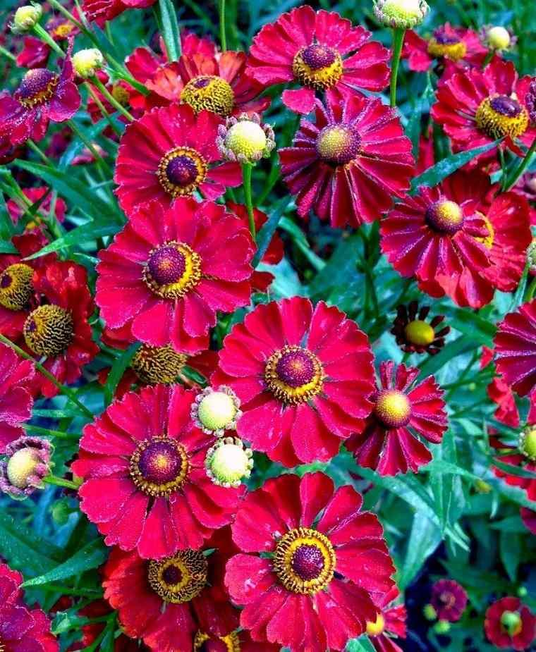 flores-de-otono-consejos-rojo