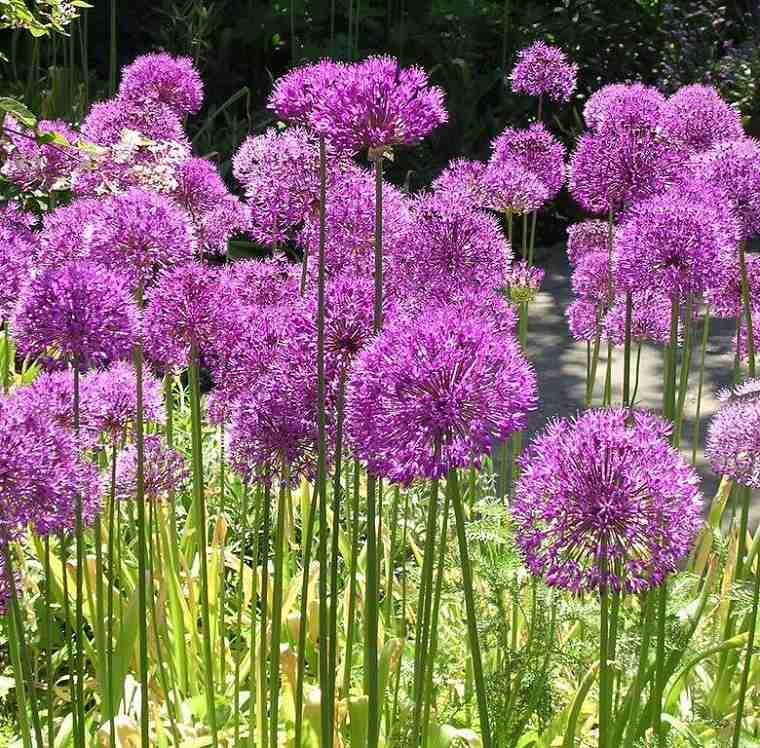flores-de-otono-ideas-allium