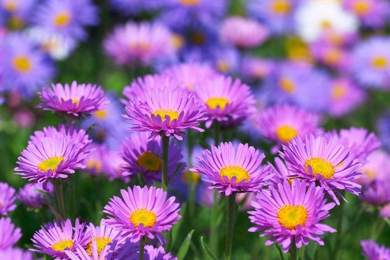 flores-de-otono-ideas-belleza