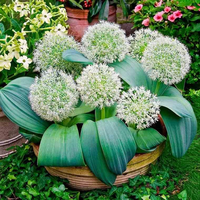 flores-de-otono-ideas-blancas