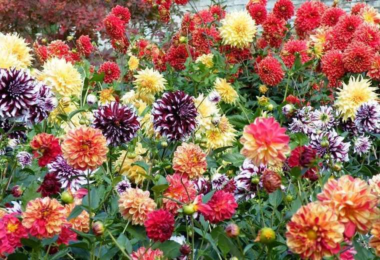 flores-de-otono-ideas-jardin
