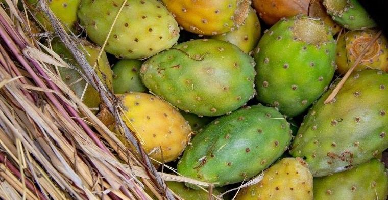 fruta de cactus previene la inflamacion