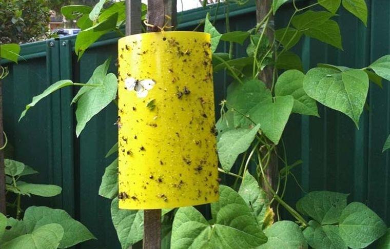 insectos voladores eliminar moscas