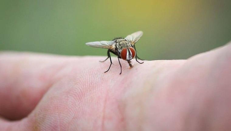 insectos voladores en el exterior