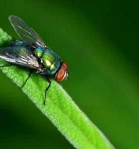 insectos voladores evitar las moscas en jardin