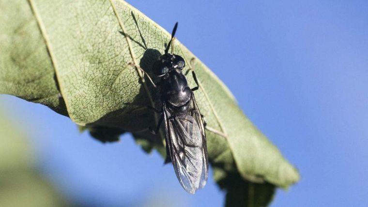 insectos voladores evitarlos al aire libre