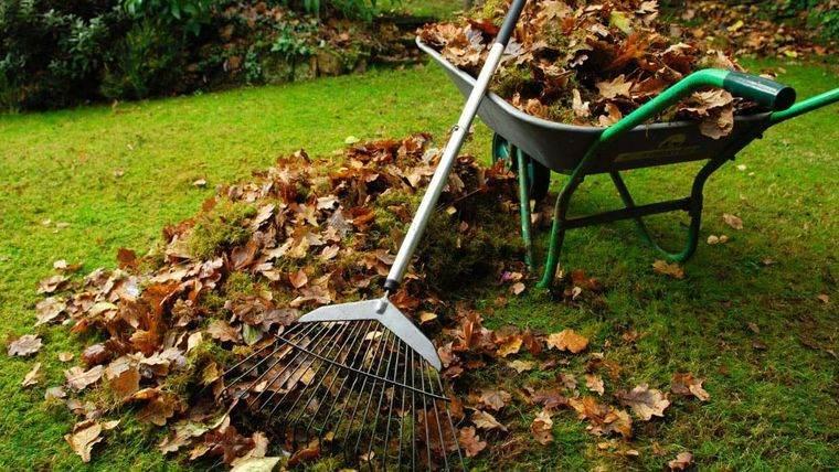 insectos voladores evitarlos limpiando jardines