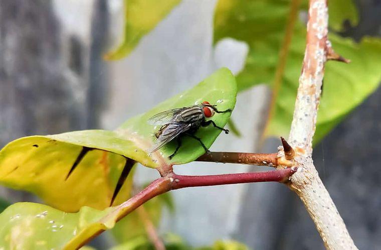insectos voladores molestas moscas en jardin