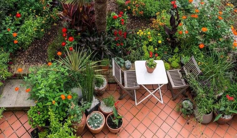 jardín tropical atencion visual