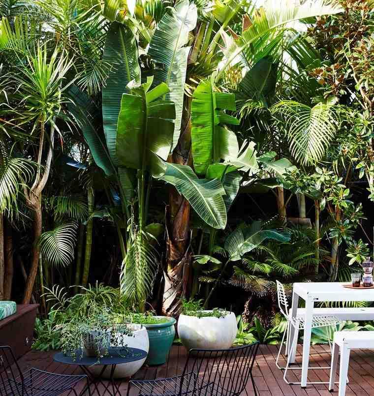 jardín tropical con palmeras
