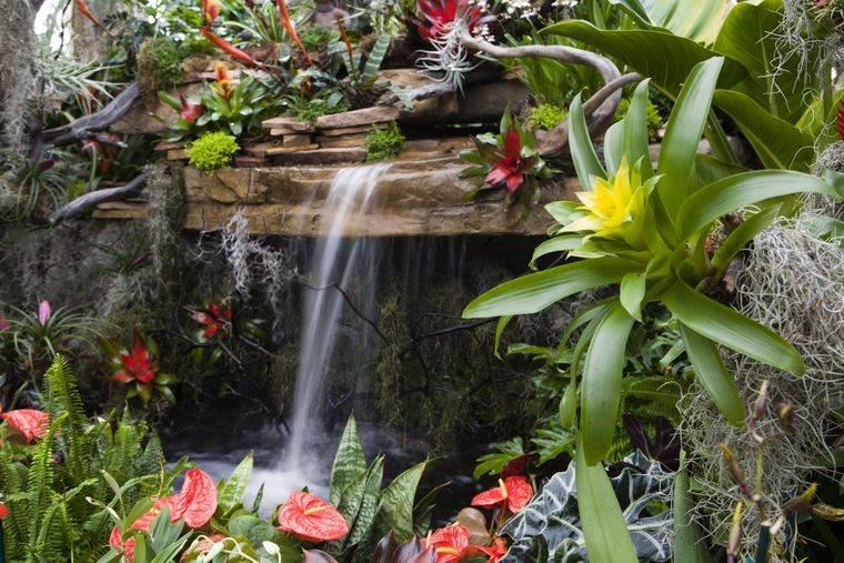 jardín tropical con pequeña cascada