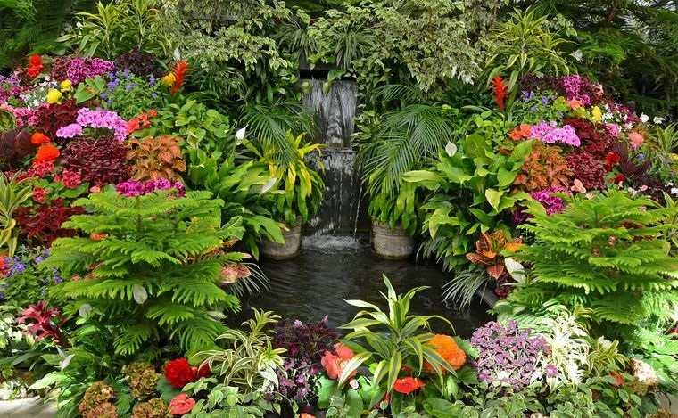 jardín tropical con pequeño estanque de agua