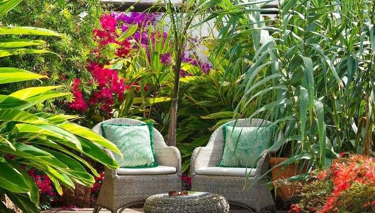jardín tropical consejos