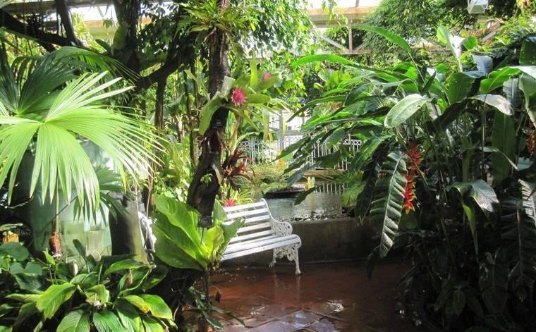 jardín tropical crea sombra