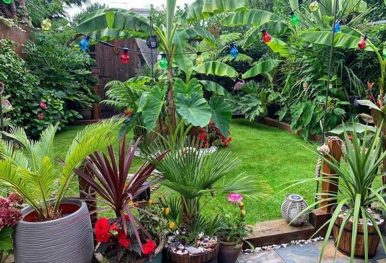 jardín tropical en pequeño patio trasero