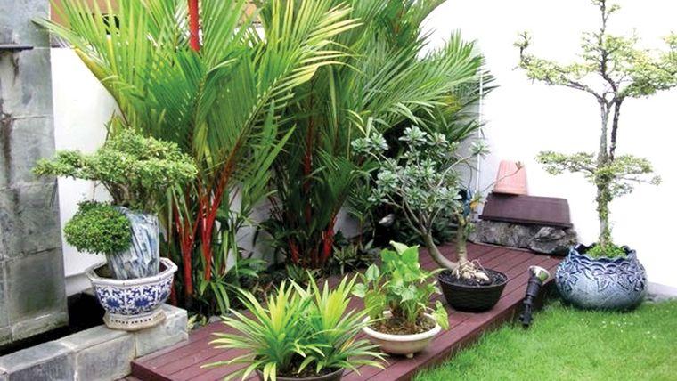 jardín tropical en pequeño rincon