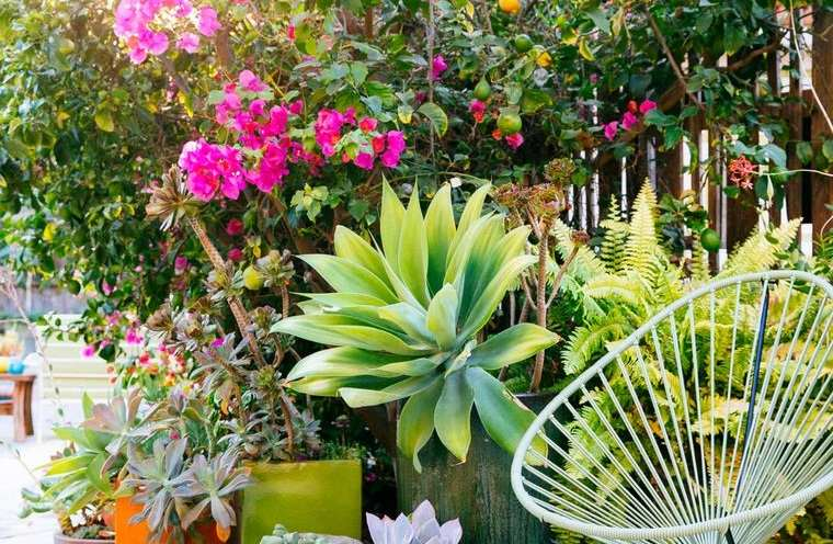 jardín tropical espacio relajante