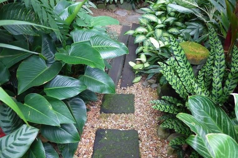 jardín tropical gran follaje
