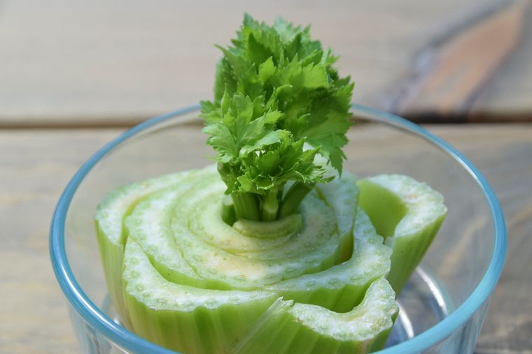 mini huerto en casa celeri