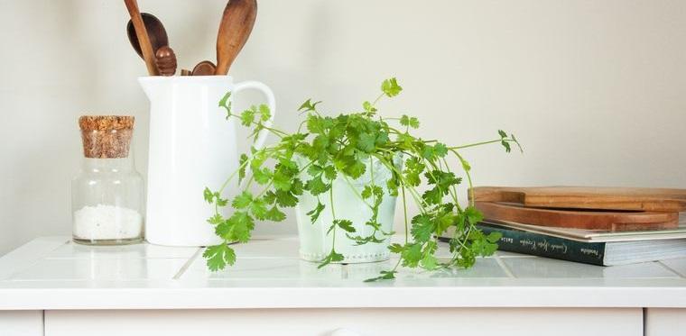 mini huerto en casa cilantro