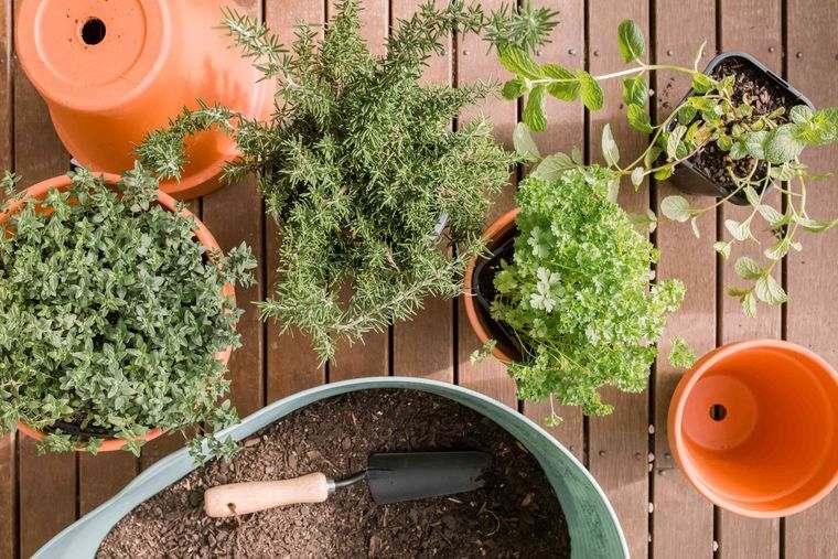 mini huerto en casa con hierbas de cocina