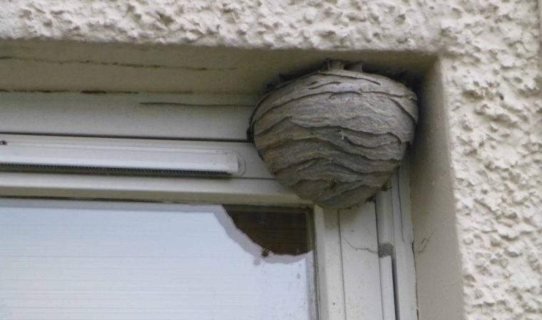 nido de avispas en casa